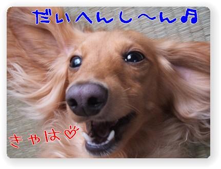 photo1007245.jpg
