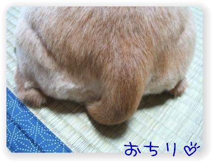 photo1007261.jpg