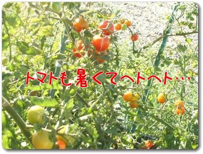 photo1008042.jpg