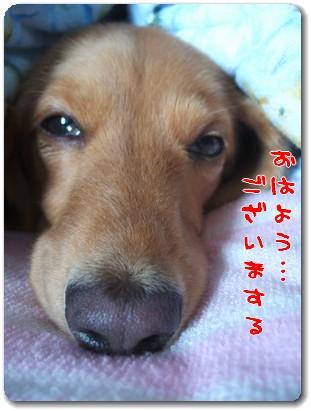 photo1008051.jpg