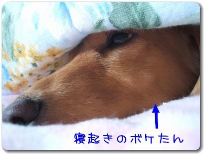 photo1008052.jpg
