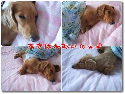 photo1008054_20100805215828.jpg