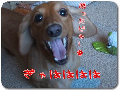 photo1008066.jpg