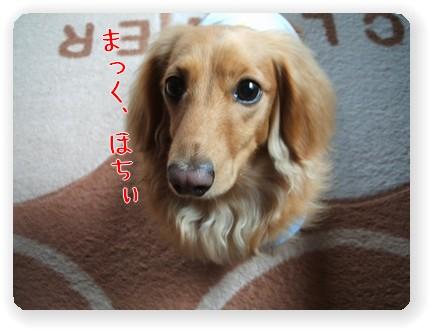 photo22-2.jpg