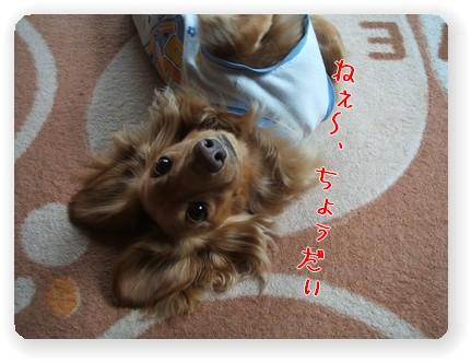 photo22-5.jpg
