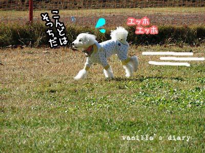 IMG_6524-2.jpg