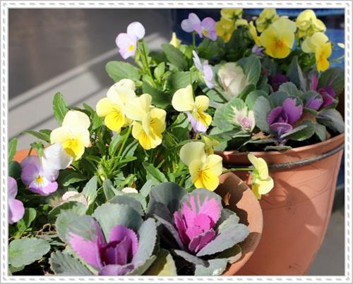 春の寄せ植え♪